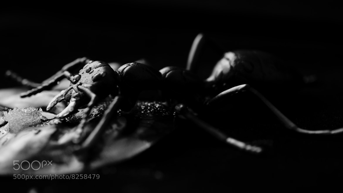 Photograph Bug life by Mohammed Abdo on 500px