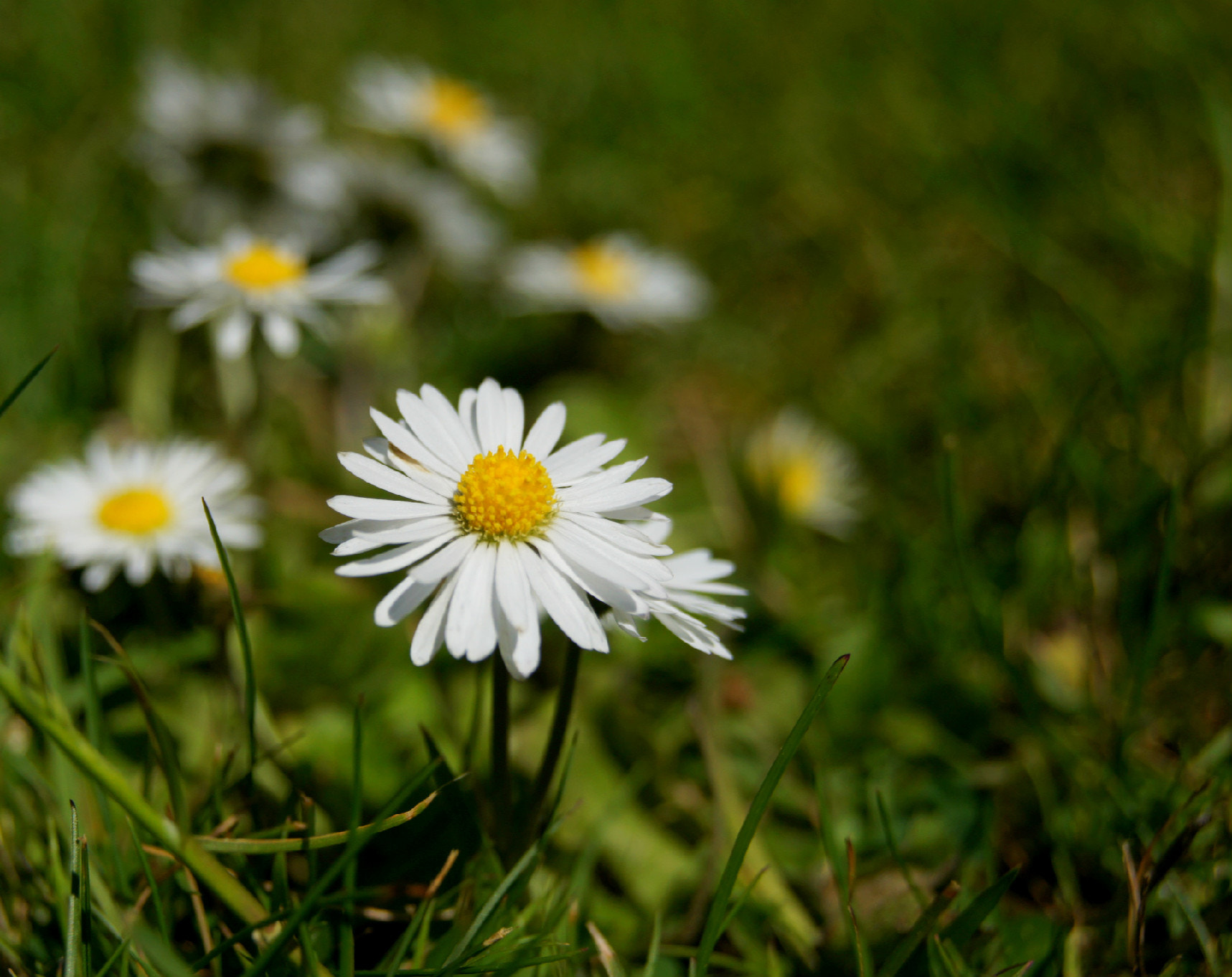 Photograph Daisy's II by Adhib M on 500px