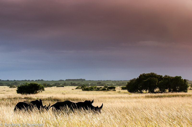 Photograph Rhino Plains! by Andrew Schoeman on 500px