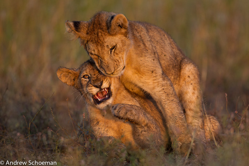 Photograph Get Off! by Andrew Schoeman on 500px