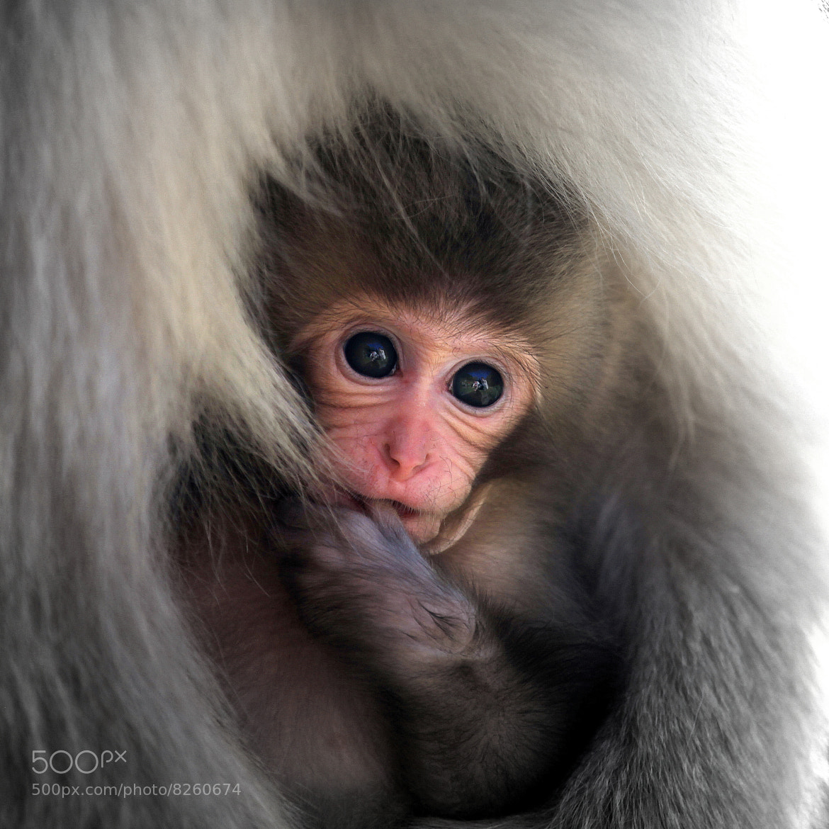 Photograph Bosom of Mammy~♪ by yume . on 500px