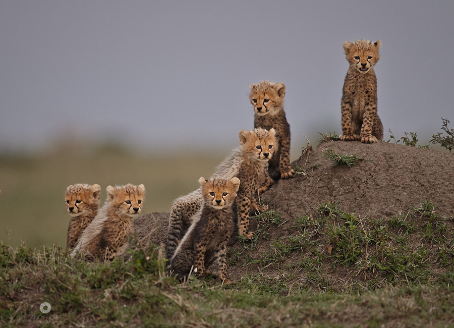 Photograph The Mara Six by Andy Howe on 500px