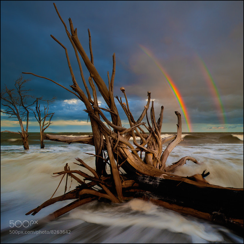 Photograph Rainbow Over Boneyard at Edisto Island by Igor Laptev on 500px