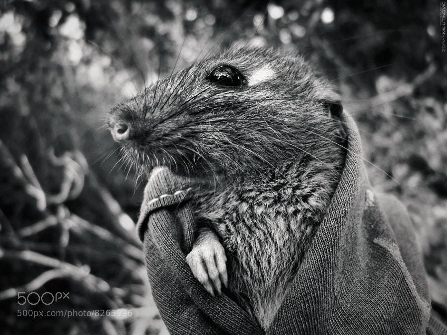 Photograph Splinter by Zoran Milutinovic on 500px
