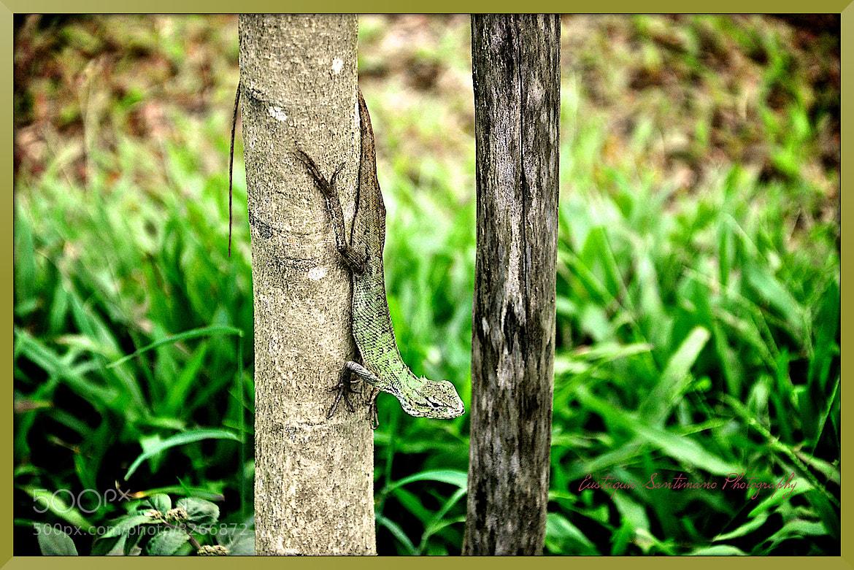 Photograph Green Lizard by Eustaquio Santimano on 500px
