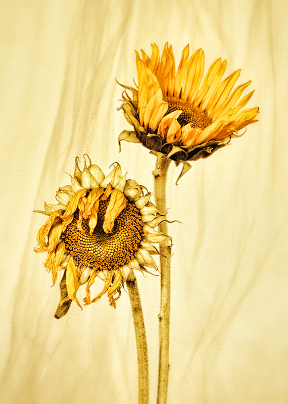 Photograph Decay by wendy  on 500px