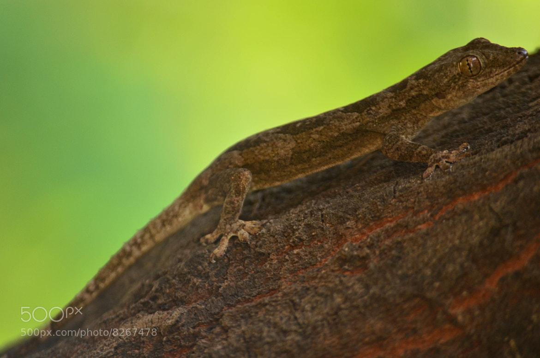 Photograph Lizard = Bark by Kumaran Shanmugam on 500px