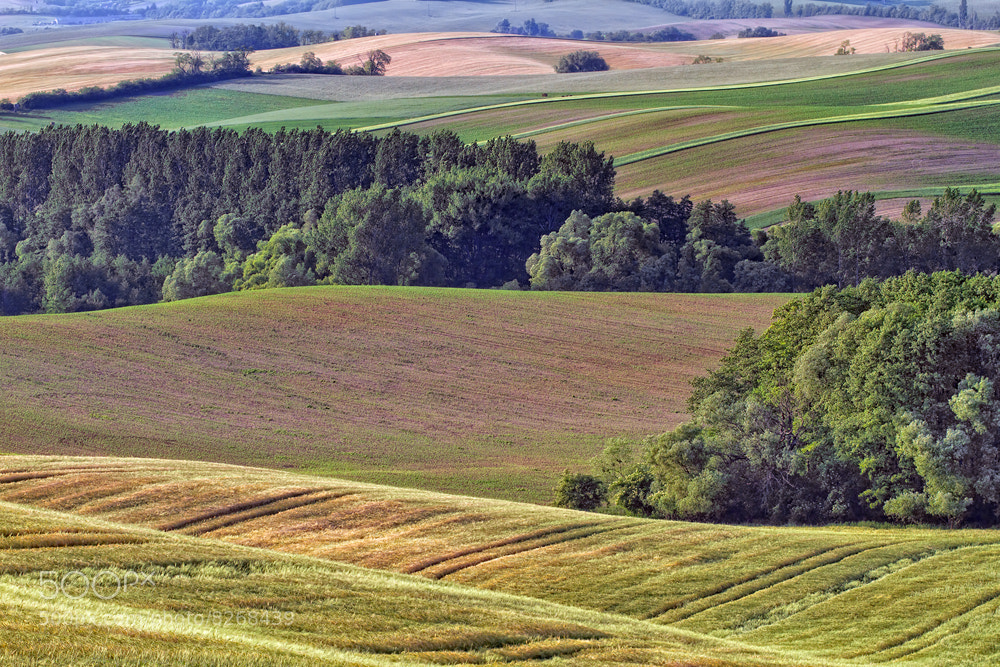 Photograph Undulating landscape by Peter Talos on 500px