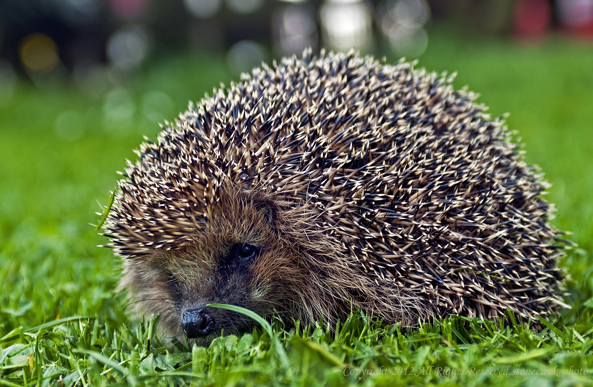 Photograph Igel by Komi Fuchs on 500px