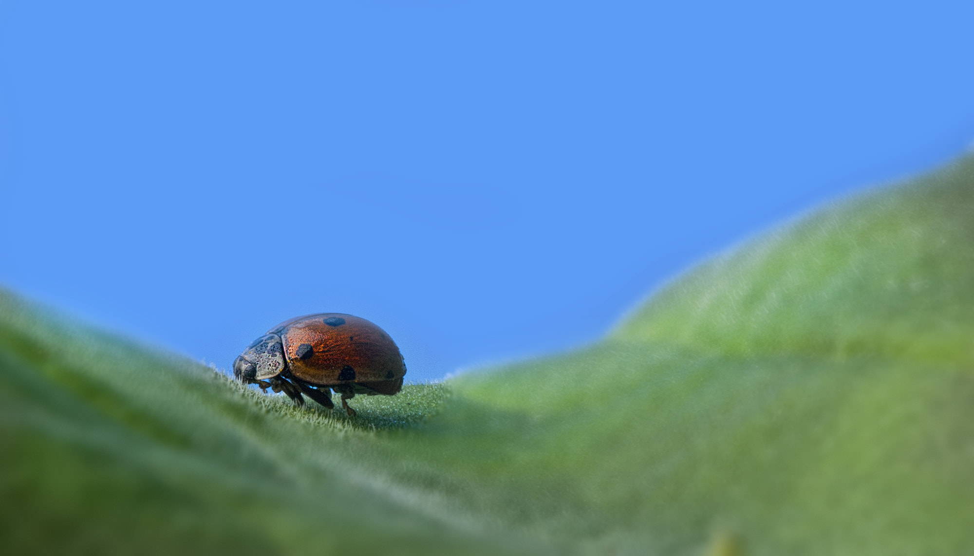 Photograph Lady Bug by Mikael Sundberg on 500px