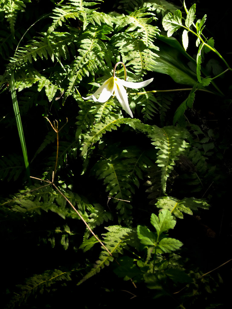 Photograph Among the Ferns by Marcia and Mike Nelson Pedde on 500px
