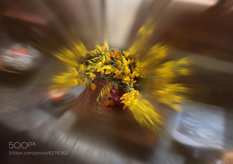 Photograph Ginesta by Geert Van der Straeten on 500px