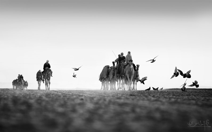 Photograph Camel racing  by Mohamed Al Jaberi on 500px