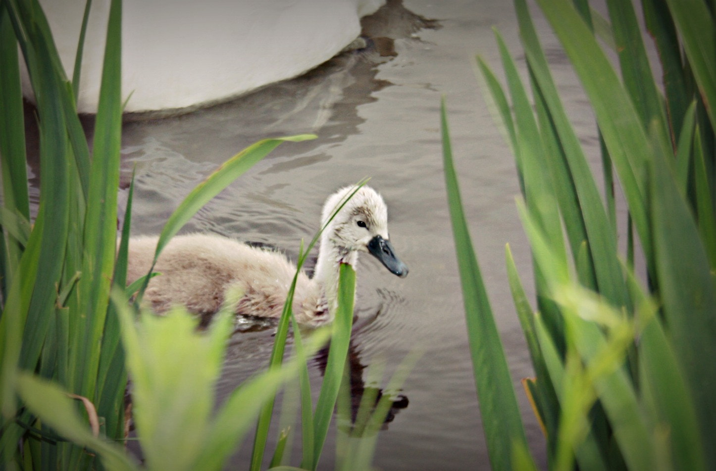 Photograph Ugly Duckling by Marlena Krolik on 500px