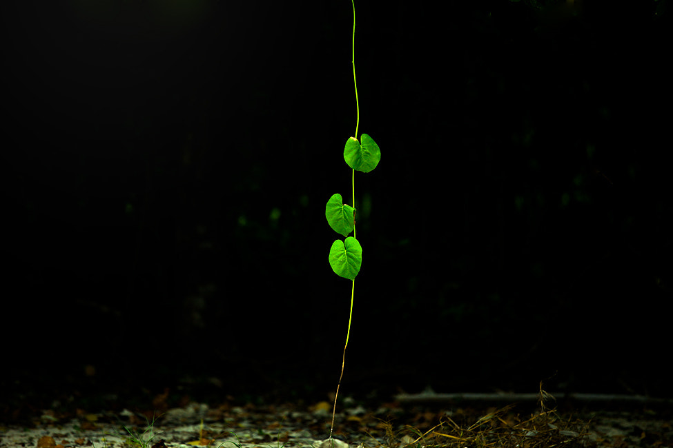 Photograph Growing by  Piatek on 500px