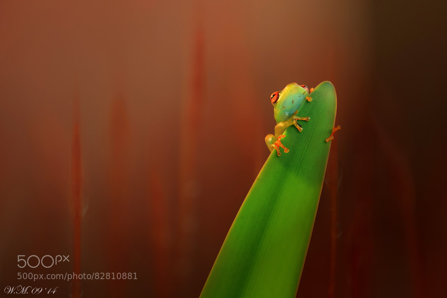"Photograph ""Hiding"" by Wil Mijer on 500px"