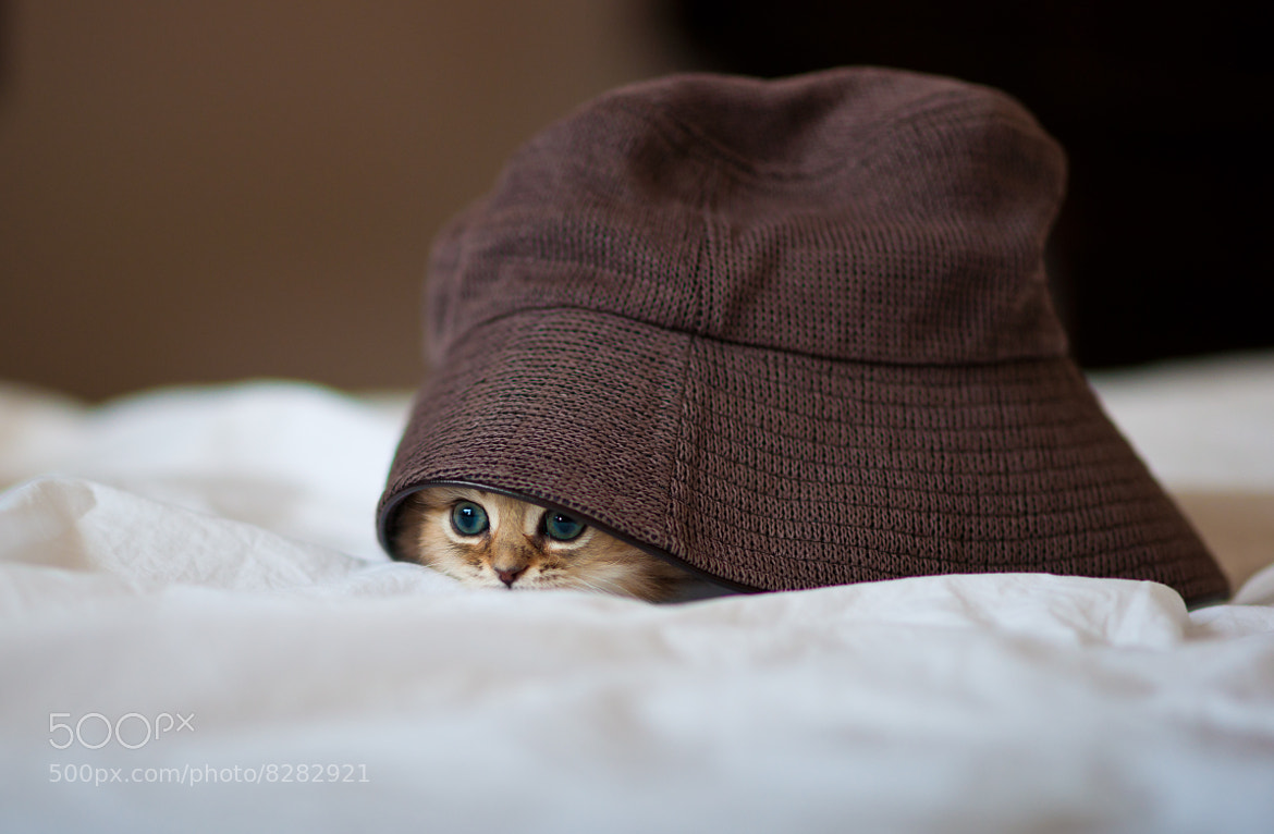 Photograph The Cat in the Oversized Hat by Ben Torode on 500px
