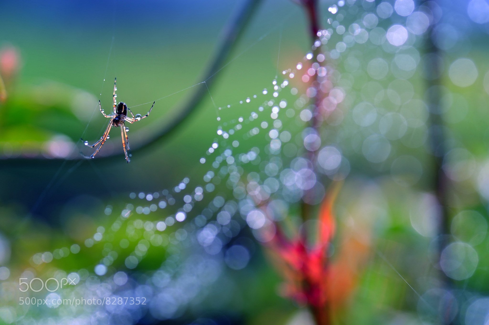 Photograph Canvas in the morning by Lafugue Logos   on 500px