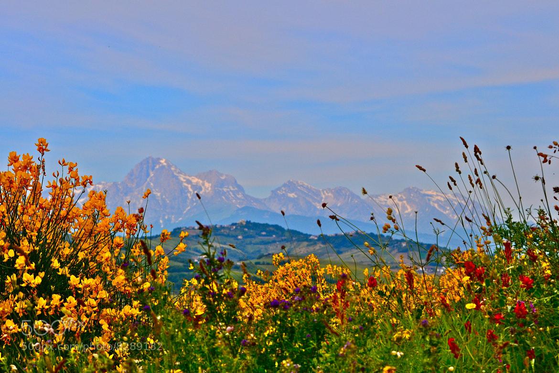 Photograph wild flowers by Domenico VITTORIO on 500px