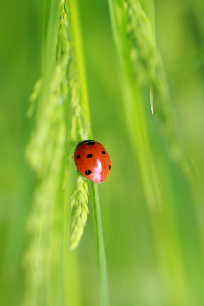 Photograph Coccinelle by Alexandre BLANCHARD on 500px