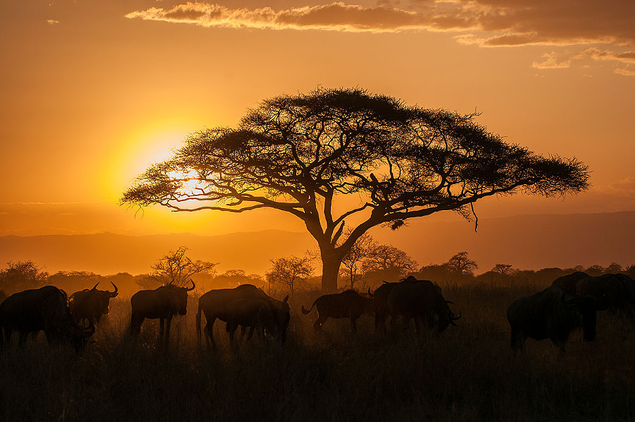 tanzania sunset by Mario Kern on 500px.com