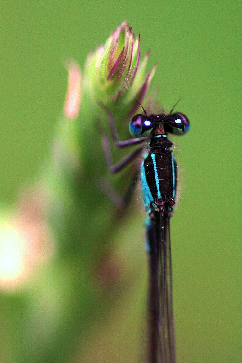 Photograph Ma Demoiselle by Alexandre BLANCHARD on 500px