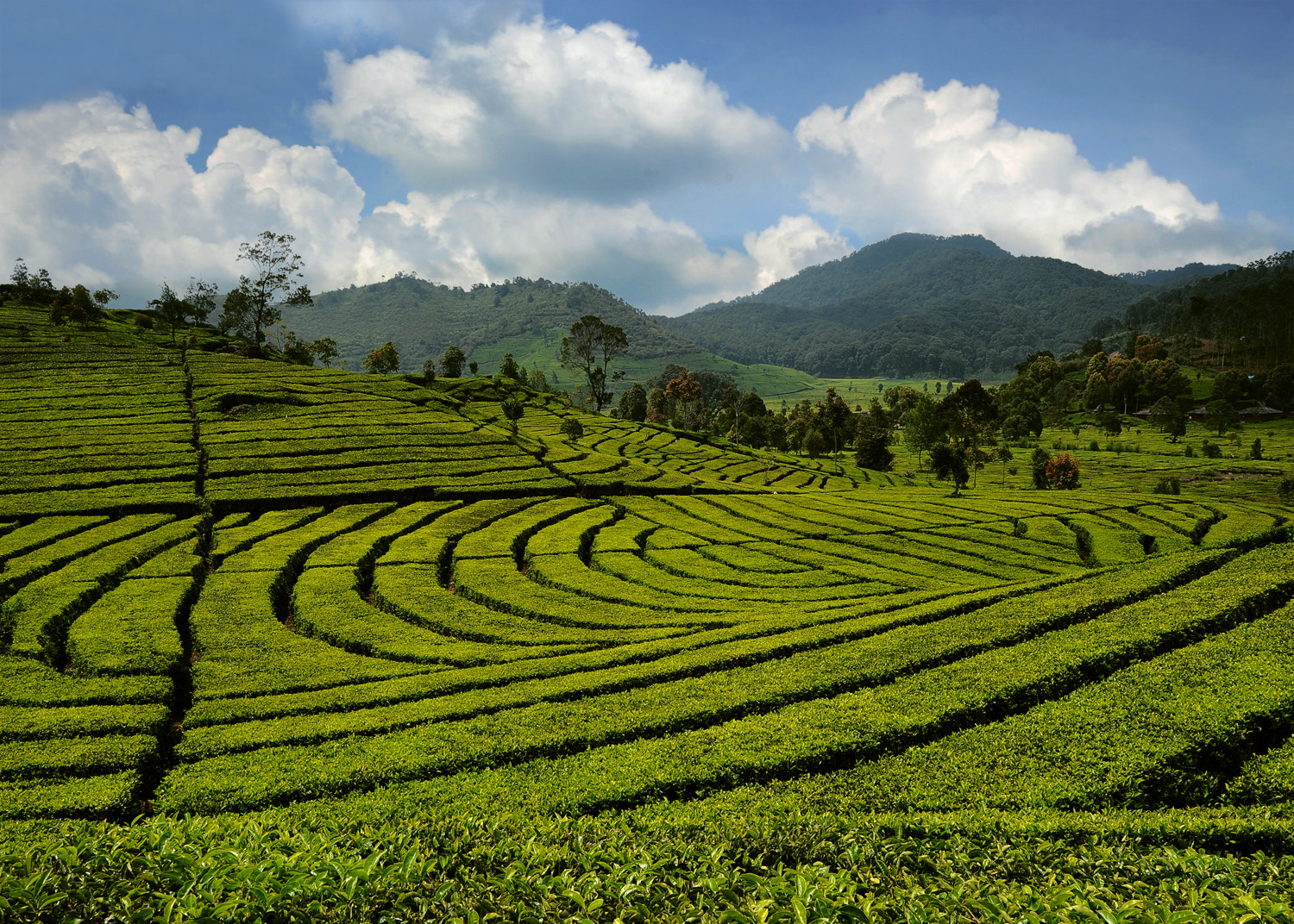 Photograph Tea Garden by Mieke Suharini on 500px