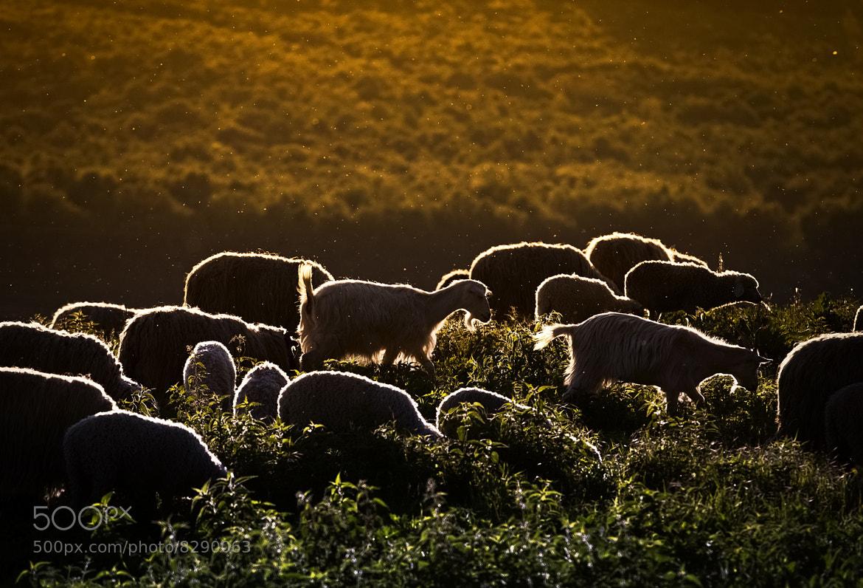 Photograph King of the Meadow by Elena Simona Craciun on 500px