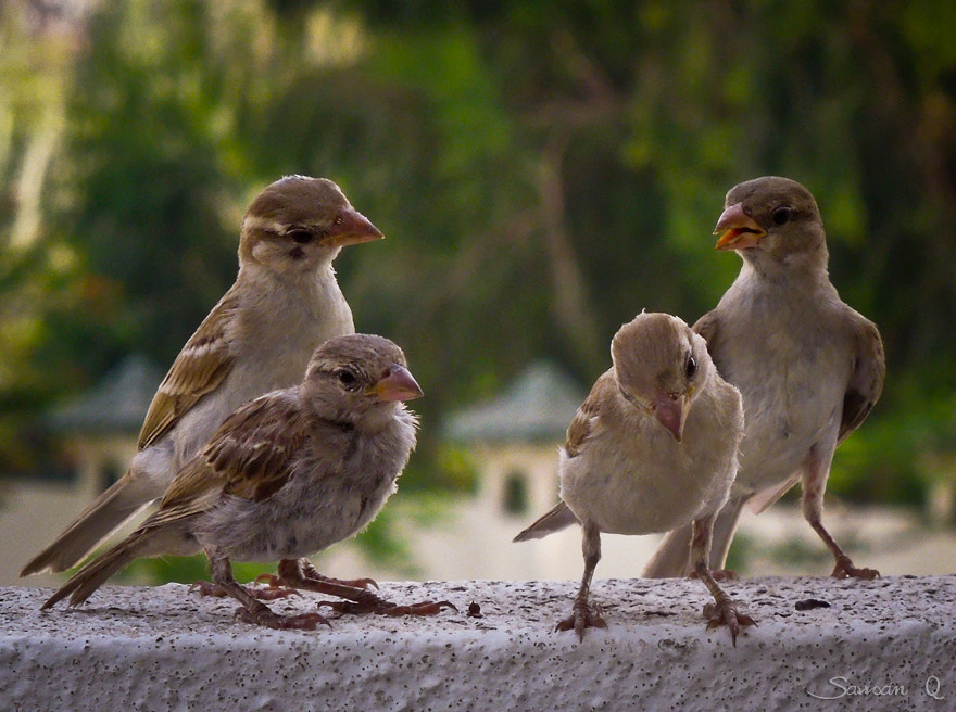 Photograph Golden girls .. by Sawsan Mohammed on 500px