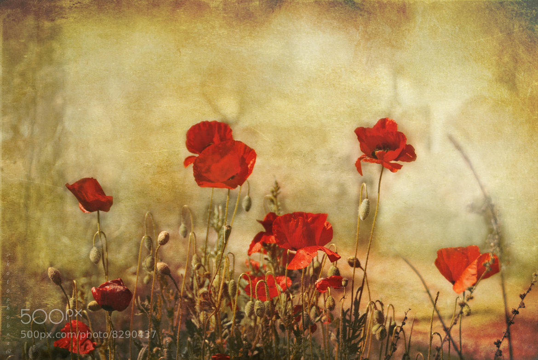 Photograph Poppies by Beatriz Ballesteros Pérez on 500px