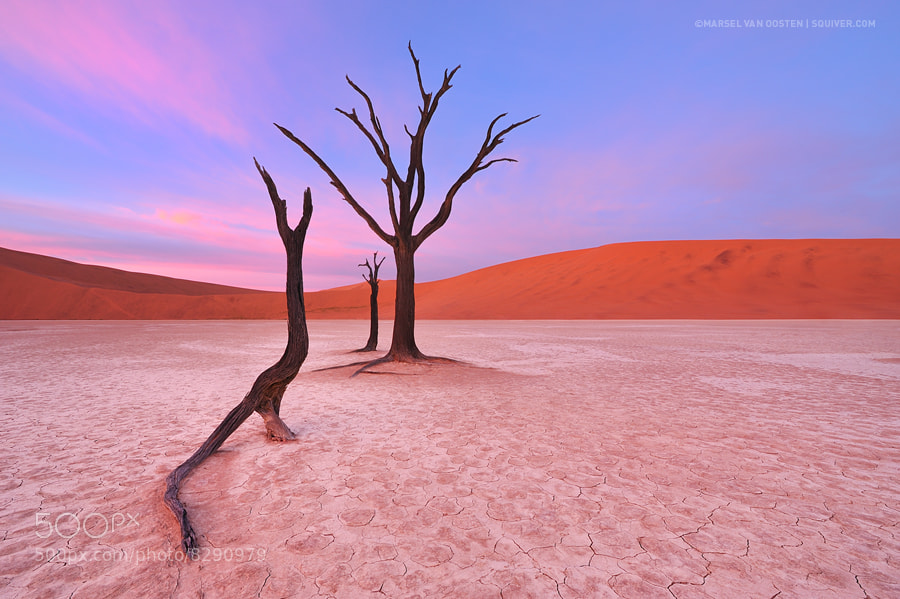 Photograph Silent Remains by Marsel van Oosten on 500px