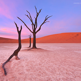 Silent Remains by Marsel van Oosten (MarselvanOosten)) on 500px.com