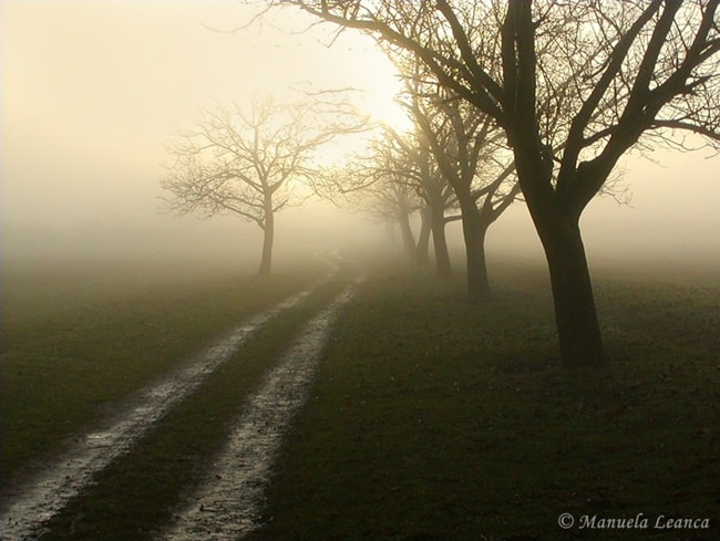 Photograph Foggy Sunrise by Manuela Humelnicu on 500px