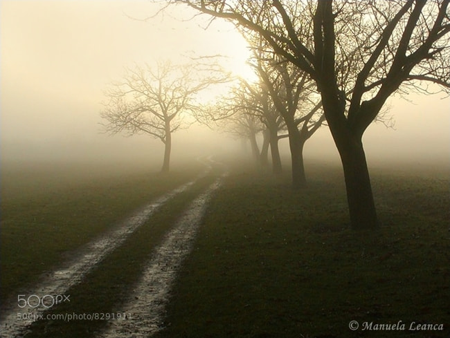 Photograph Foggy Sunrise by Manuela Leanca on 500px