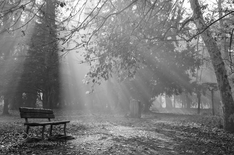 Photograph Wait the light _ B&W by Riccardo Casarico on 500px