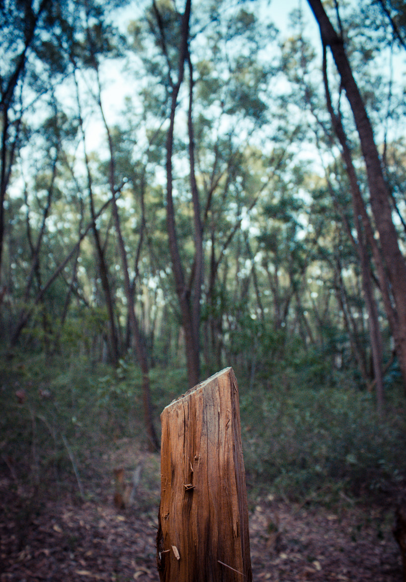 Photograph Deforestation, one at a time by Raghu R on 500px