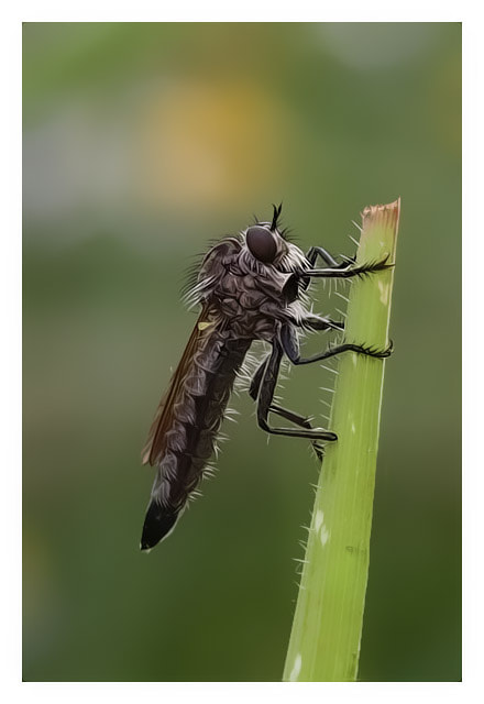Photograph Robber fly by Bulent Pekardan on 500px