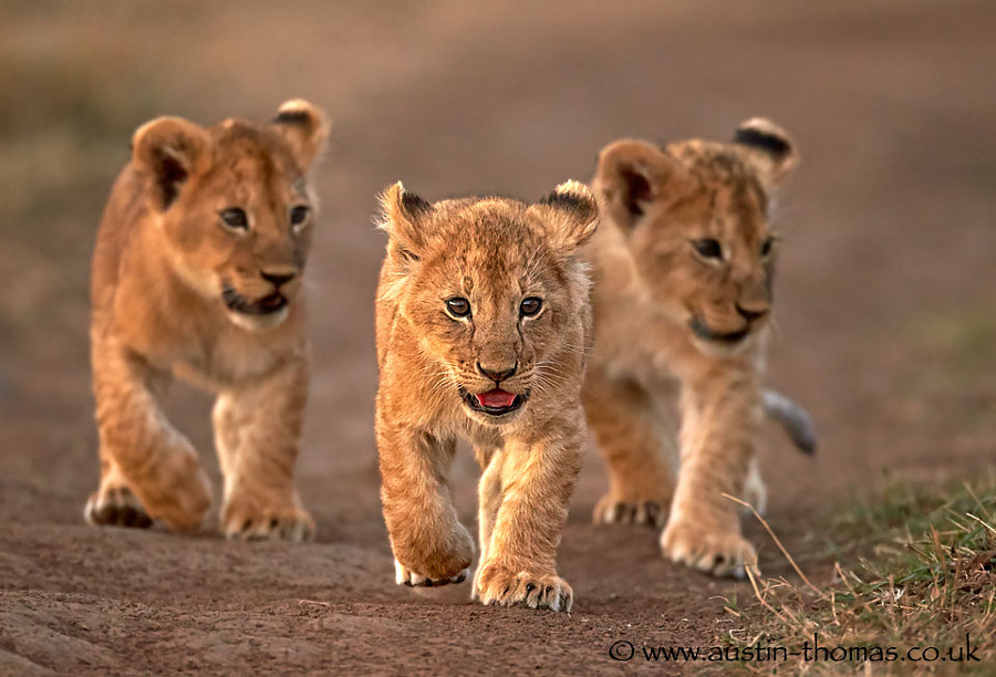 The leader of the pack...