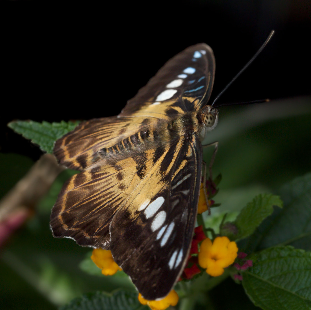 Photograph Papillon by Justin Grenon on 500px
