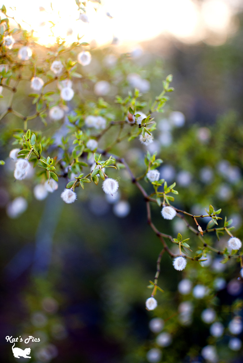 Photograph Larrea Tridentata From Another Angle by Katheryn Navas on 500px