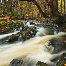 The Shimna River by Gary McParland (garymcparland)) on 500px.com