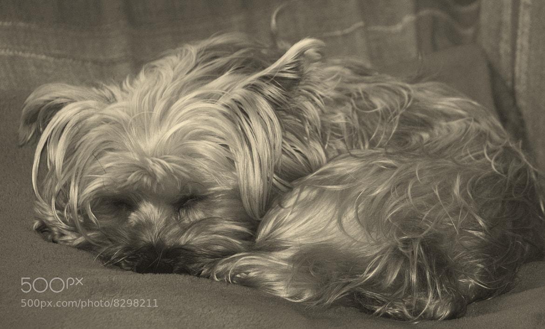 Photograph nap time by Raquel Camurasiquel on 500px