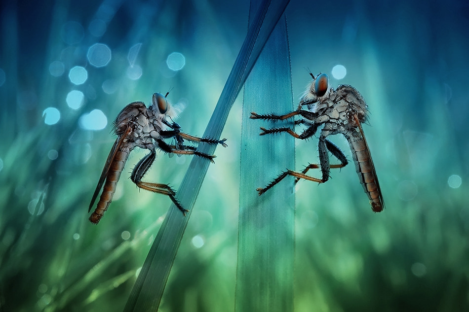 Photograph Duo by syuwandi sien on 500px