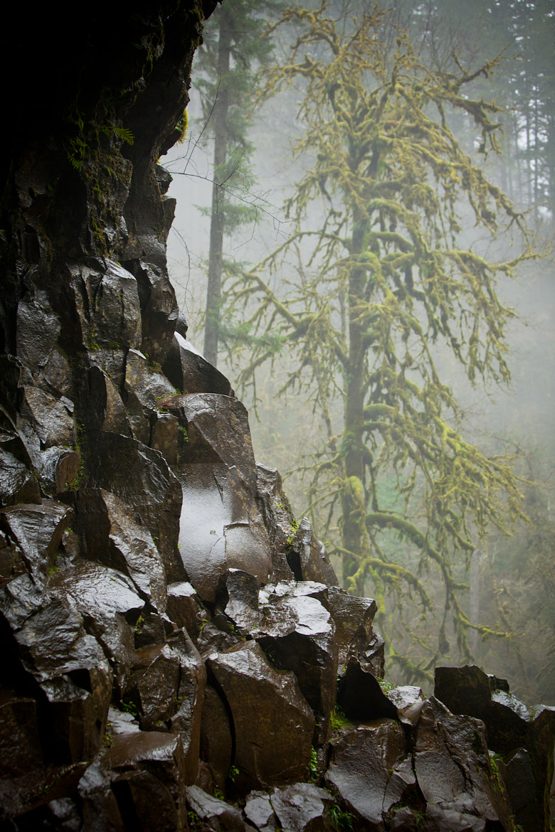 Photograph Cave and Forest by Ryan Katsanes on 500px