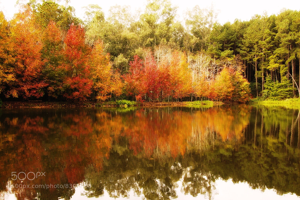 Photograph Autumn Colors by Alberto Nogueira Junior on 500px