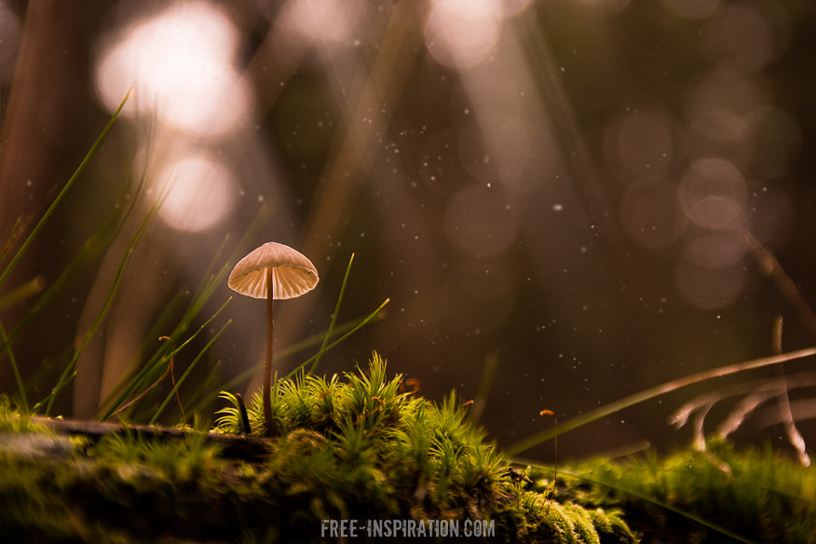 Mushroom Time by Sven Zickler on 500px.com