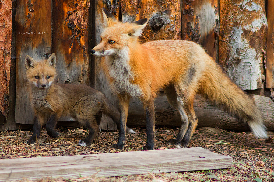 Photograph Mom and Kit by John De Bord Photography on 500px