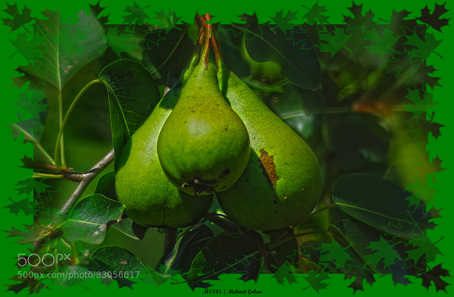 Photograph pear by Mehmet Çoban on 500px
