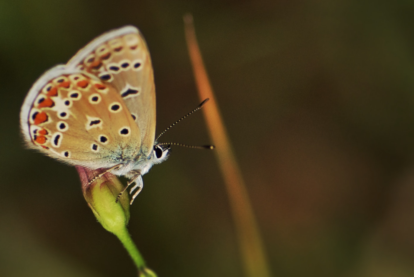 Photograph Small Butterfly by Simone Ciliberti on 500px