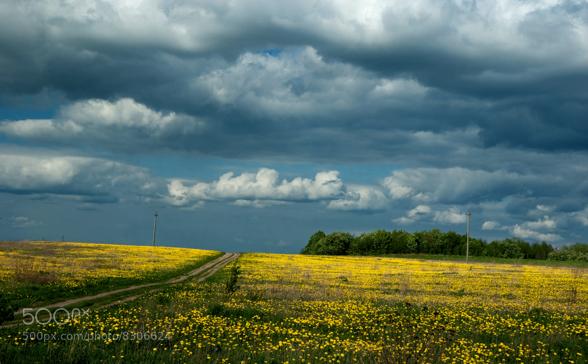Photograph Road to a field by Sergey Suhanov on 500px